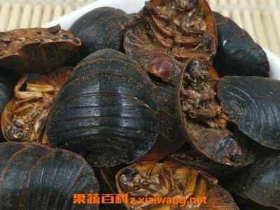 土鳖虫的副作用 吃土鳖虫要禁忌什么